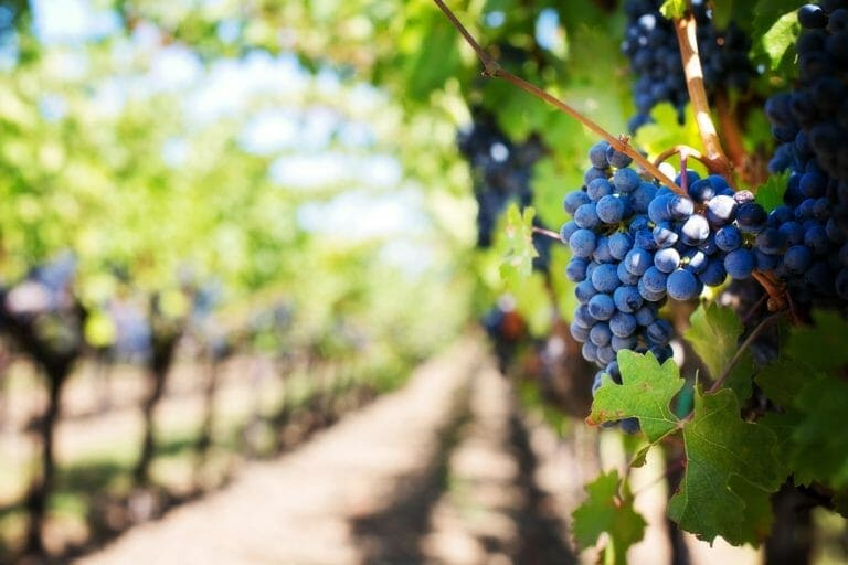 best wineries in norman ok