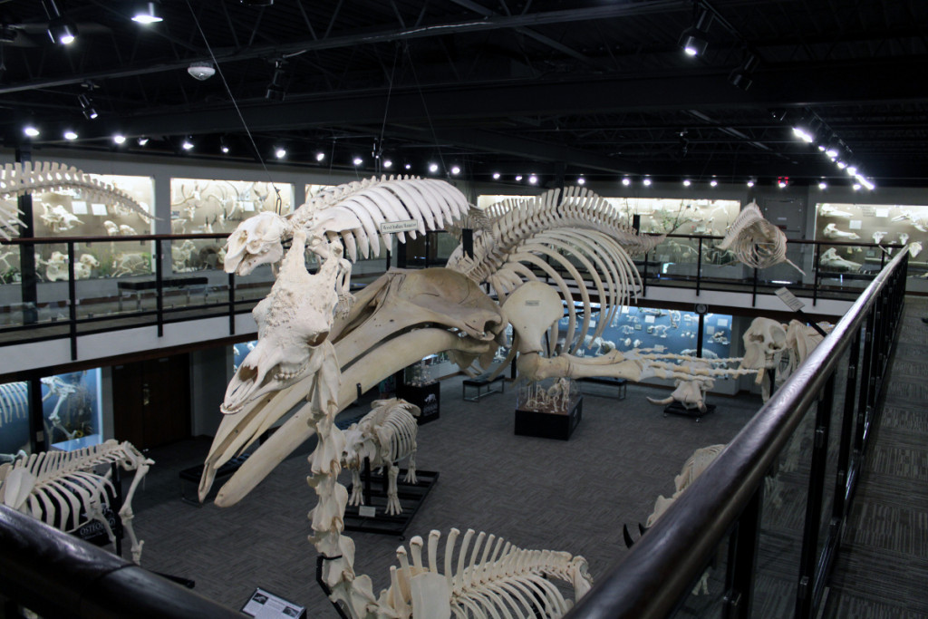 Best museums in Oklahoma City OKC - Museum of Osteology OKC
