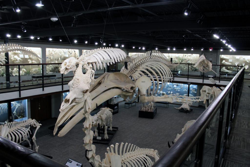 Natural History Museum Okc